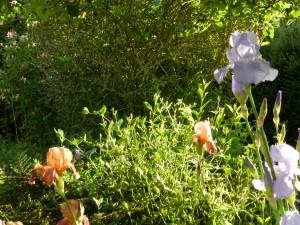 dscn1009-300x225 dans jardin