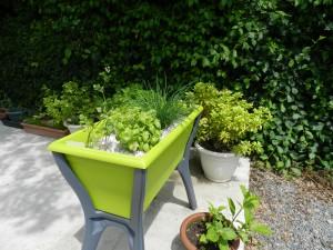 Les herbes pour la cuisine dans jardin dscn1029-300x225