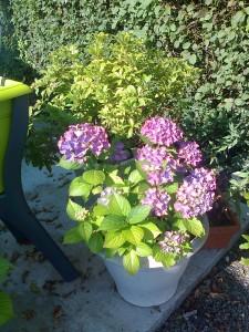 photo0488-225x300 dans jardin